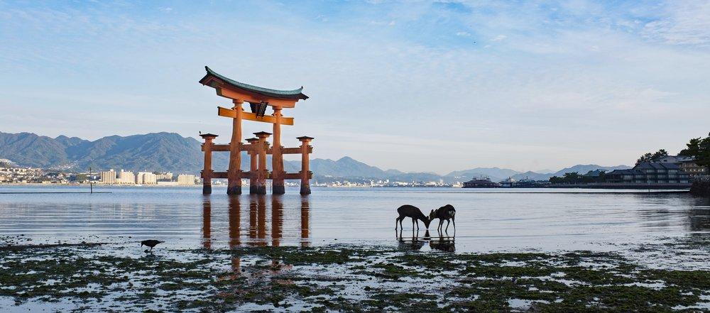 Cuddling Deer in Miyajima